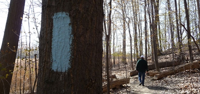 Buckeye Trail Blue Blaze marking