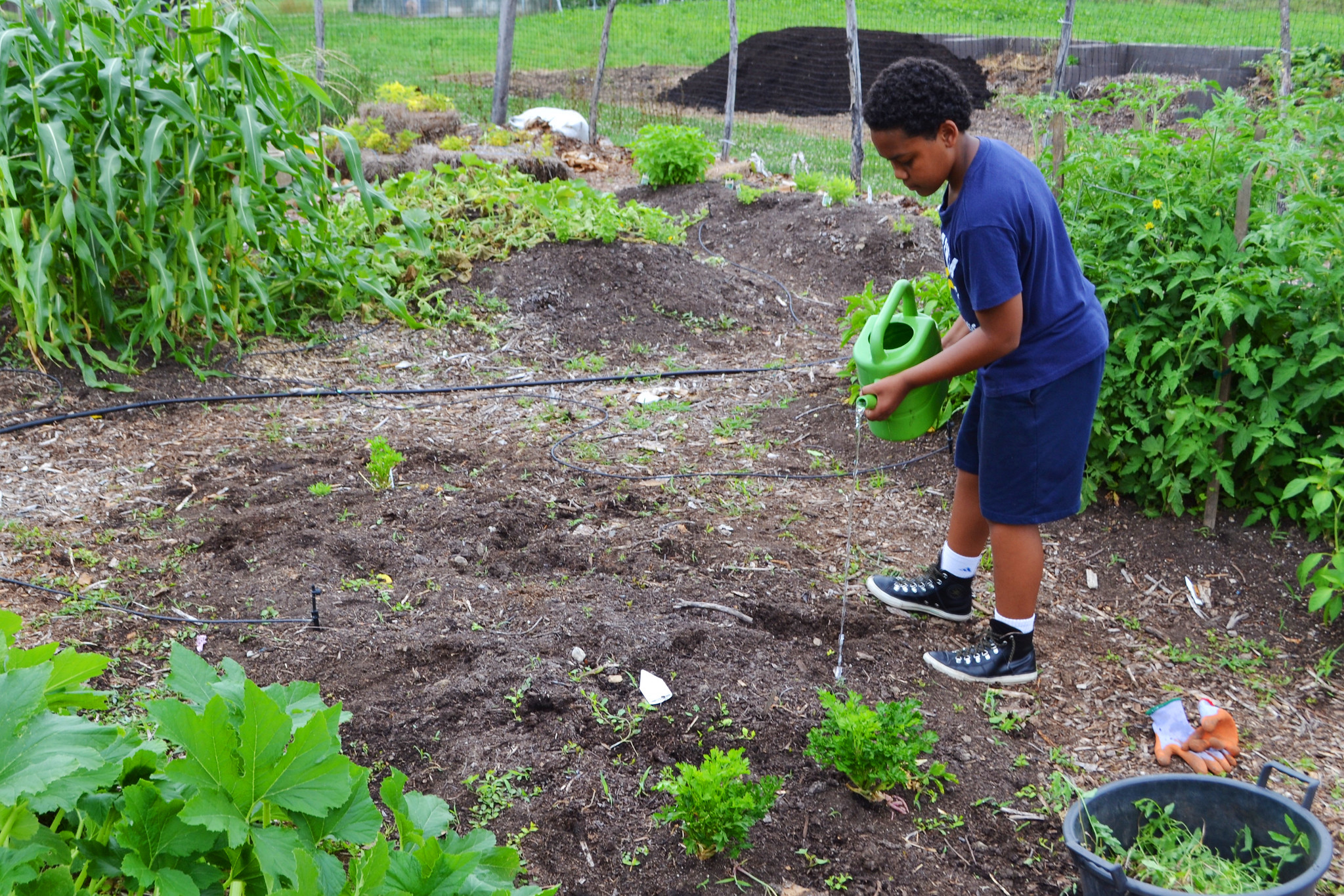 Grow your own with a Victory Garden this summer